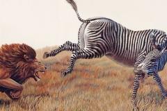 Zebra vs Lion