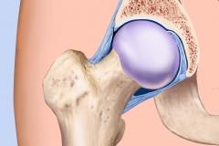 Normal Hip Anatomy